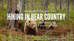 Best Bear Spray: How to Handle Bear Encounters