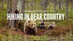 Best Bear Spray: How to Handle Bear Encounters