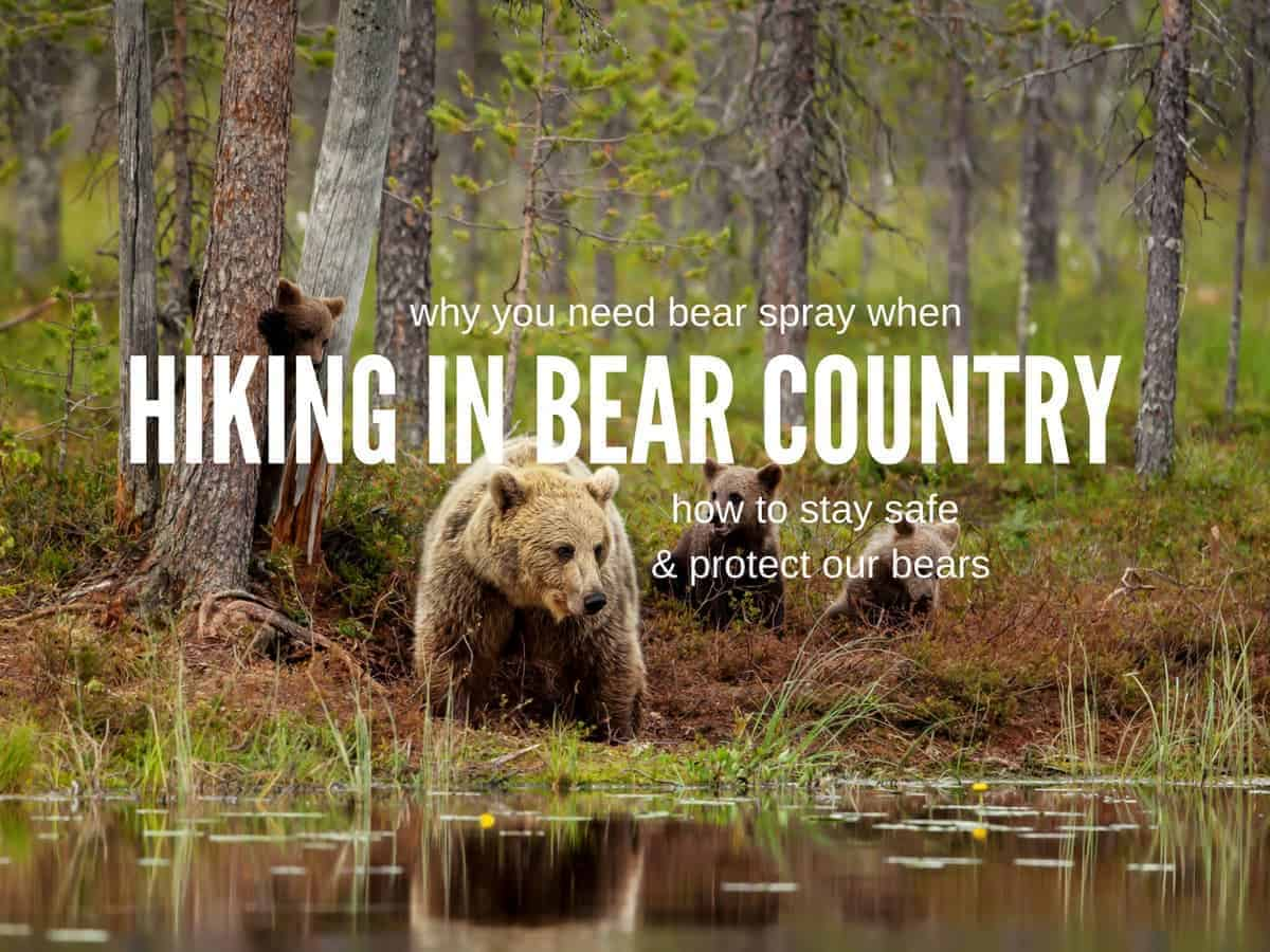 safety in bear country
