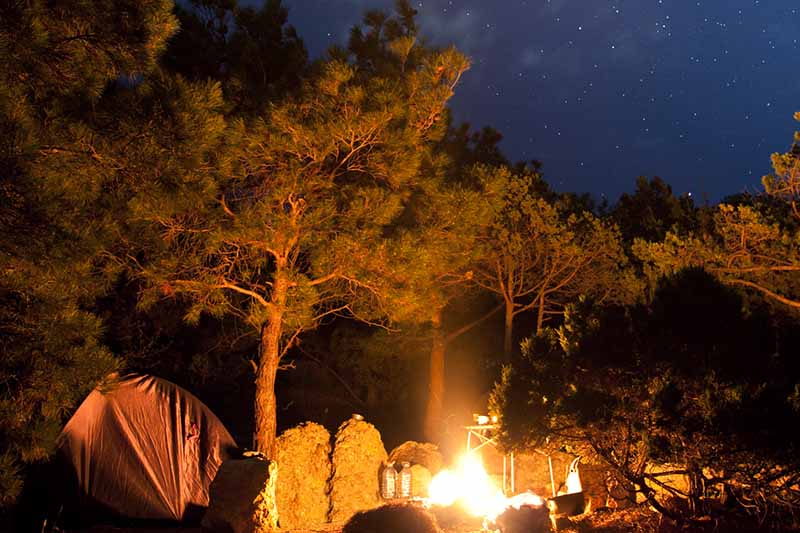 A campsite at night with a fire lighting a tent to the left of the frame and pine trees in the background with a starry sky.